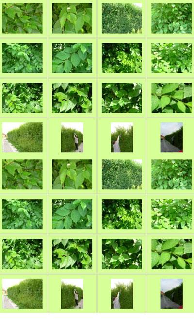 Bilder über Die Pflanze Wunderheckeat
